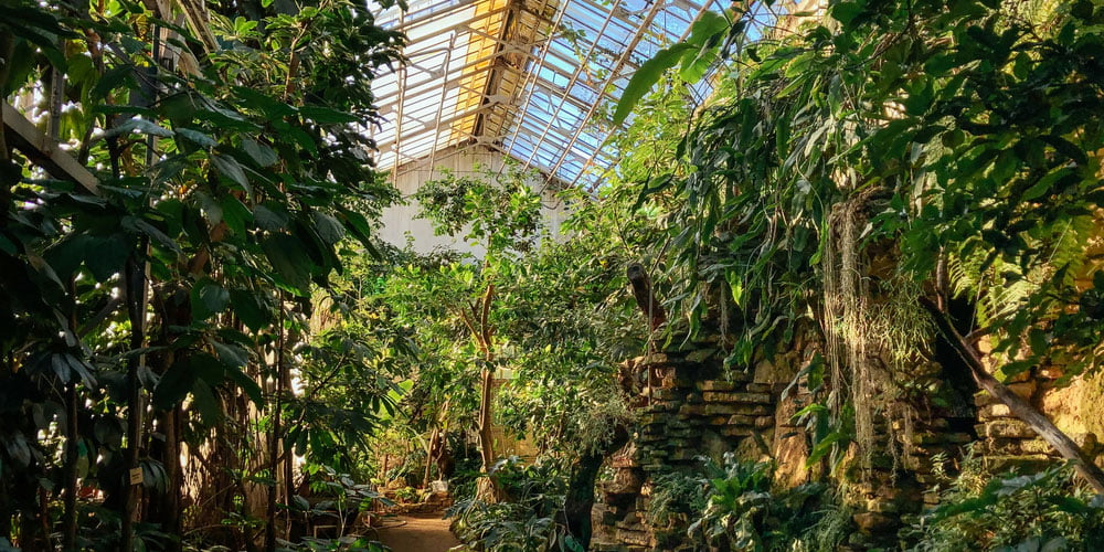 A greenhouse with tropical plants